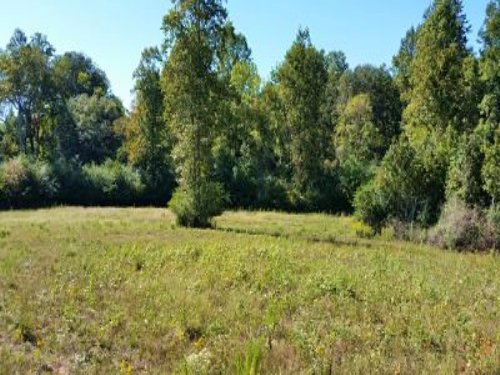 108 +/- Acres : Greenville : Meriwether County : Georgia