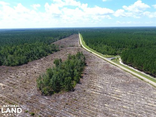 Recreational Timber Tract : Suttons : Williamsburg County : South Carolina