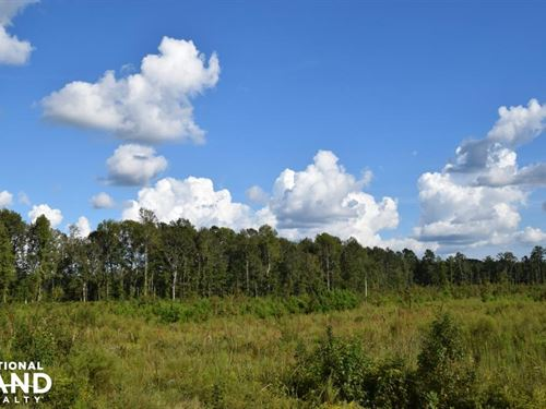 Sutton Recreational Investment Trac : Suttons : Williamsburg County : South Carolina