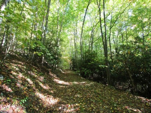 Secluded 30 Acre Wooded Parcel : Elk Creek : Grayson County : Virginia
