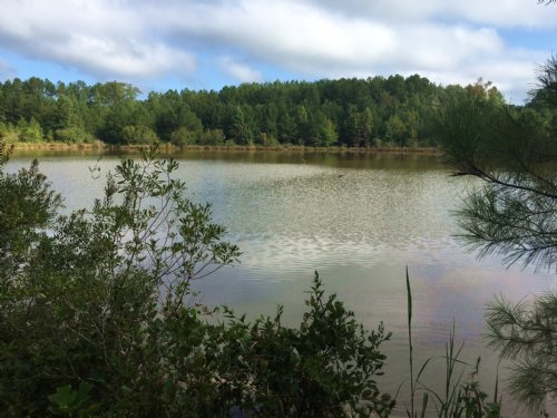 105 Acres With 3 Acres Pond : Banks : Pike County : Alabama