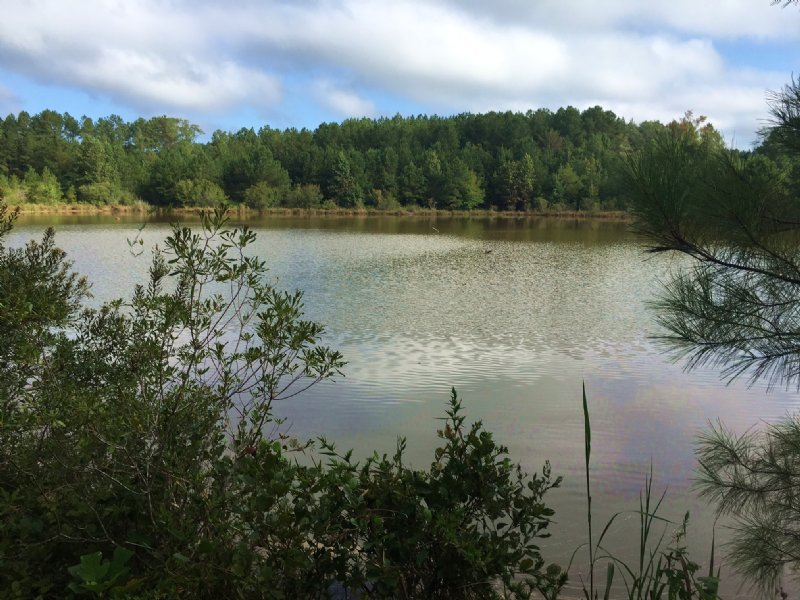 105 Acres With 3 Acres Pond : Farm for Sale : Banks : Pike ...