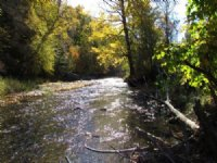 20 Acres Creek Near State Forests