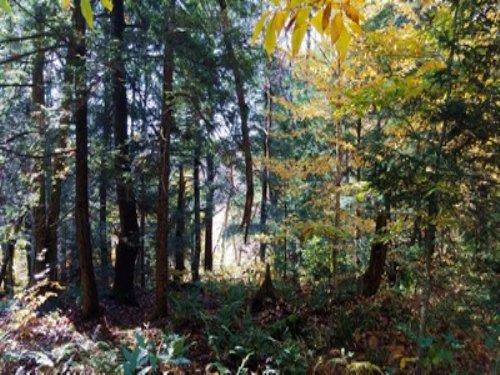 Tug Hill Woodlands & Stream : West Leyden : Lewis County : New York
