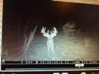 48 Acres Middle Of Big Buck Country