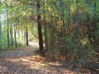 87.50 Acres Hunting Land, Timber