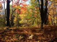 Rural Home Or Camp Spot : West Leyden : Lewis County : New York