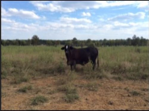 1074 Acres In Noxubee County : Brooksville : Noxubee County : Mississippi