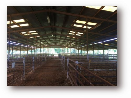 20 Acre Cattle Operation Farm In Ho : Pickens : Holmes County : Mississippi