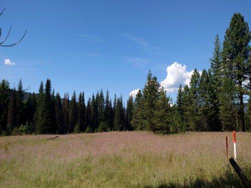 Bismark Meadows : Nordman : Bonner County : Idaho