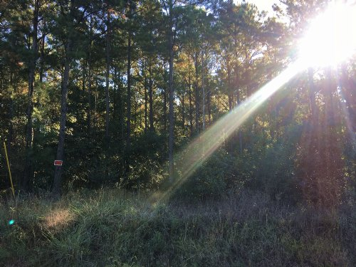 22 Acres Lone Oak Drive : Oakhurst : San Jacinto County : Texas