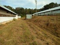 Wilkinstown Poultry Farm