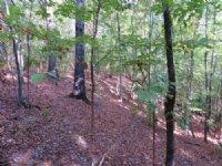 Turkey Ridge Tract : Richland : Stewart County : Georgia