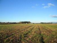 217 Acres Level Farmland