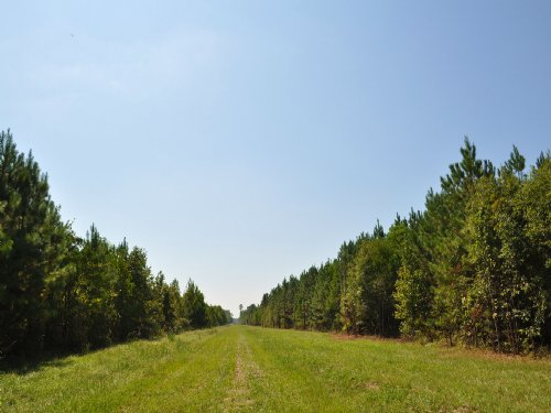 19 Acres Fm 787 : Rye : Liberty County : Texas