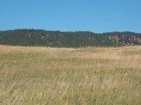 Beautiful 5 Acres By Sundance : Sundance : Crook County : Wyoming