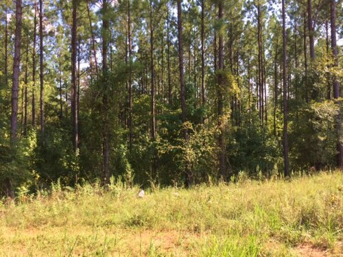 47+/- Ac Near Auburn : Waverly : Lee County : Alabama