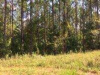 47+/- Ac Near Auburn : Waverly : Lee County : Alabama