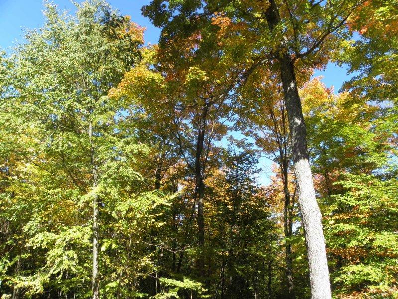 Edinburg Forest : Edinburg : Saratoga County : New York