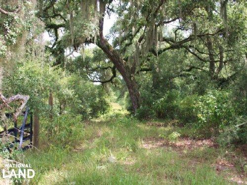 93 +/- Acre Ranch - Hunting / Get-A : Columbus : Colorado County : Texas