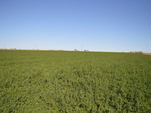 385.46 Acre Irrigated Farm : Lamar : Prowers County : Colorado