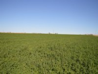 235.5 Acre Irrigated Farm : Lamar : Prowers County : Colorado