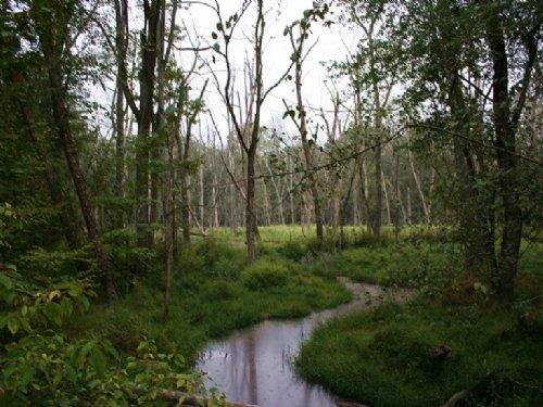 Goose Pond Tract : Vesta : Oglethorpe County : Georgia
