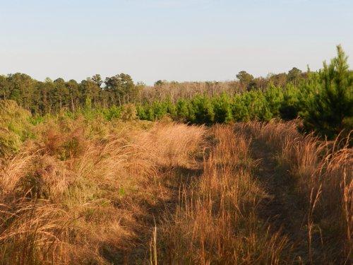 Peeples Waldburg Tract : Furman : Hampton County : South Carolina