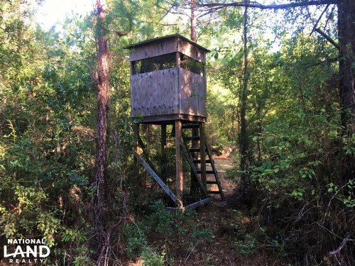 Hickory Hill Hunting & Timber Tract : Varnville : Hampton County : South Carolina