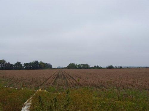 74 Ml Ac Ir Farmland & Duck Hunting : Weldon : Jackson County : Arkansas
