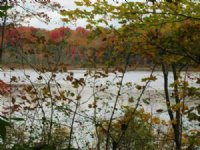 68 Acres Near Oneida Lake Woodlands