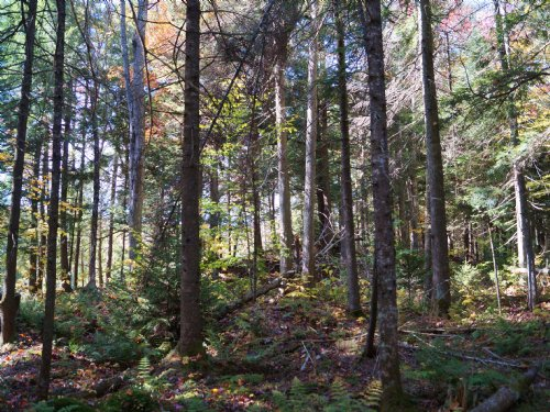 Dodge Road Forest : Lake Elmore : Lamoille County : Vermont