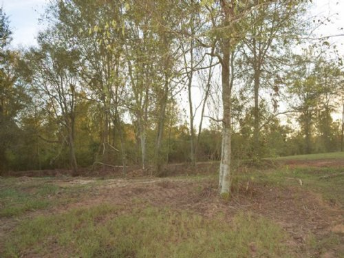 11.18 Acres In Walthall County : Jayess : Walthall County : Mississippi