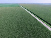 Land Auction - 8,638+/- Ac-46 Tract