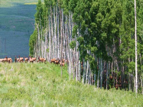 Smith Basin Ranch : Toponas : Routt County : Colorado