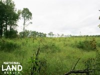 Windsor Hunting & Timber Tract