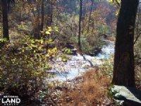 366+/- Acre Deer & Turkey Property