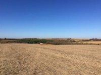 Platteville Farmland 52.81 Acres : Platteville : Grant County : Wisconsin
