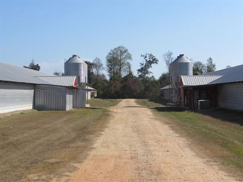 Jumbo Bird Farm Collins Ms : Collins : Covington County : Mississippi