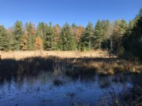 Southern Adirondack Forestlands : Stratford : Fulton County : New York