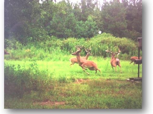 307 Rankin County : Pelahatchie : Rankin County : Mississippi