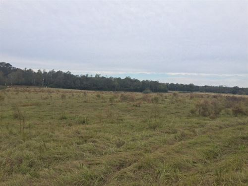 Pasture, Timberland For Sale Pike : Summit : Pike County : Mississippi