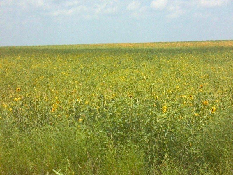 517 Acre Crp Farm High Return : Boone : Pueblo County : Colorado