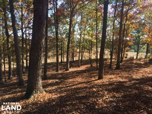 Sunset Road Homesite, Hunting, & Ti : Hodges : Franklin County : Alabama