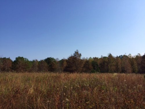 38± Acres : Pickens : Madison County : Mississippi