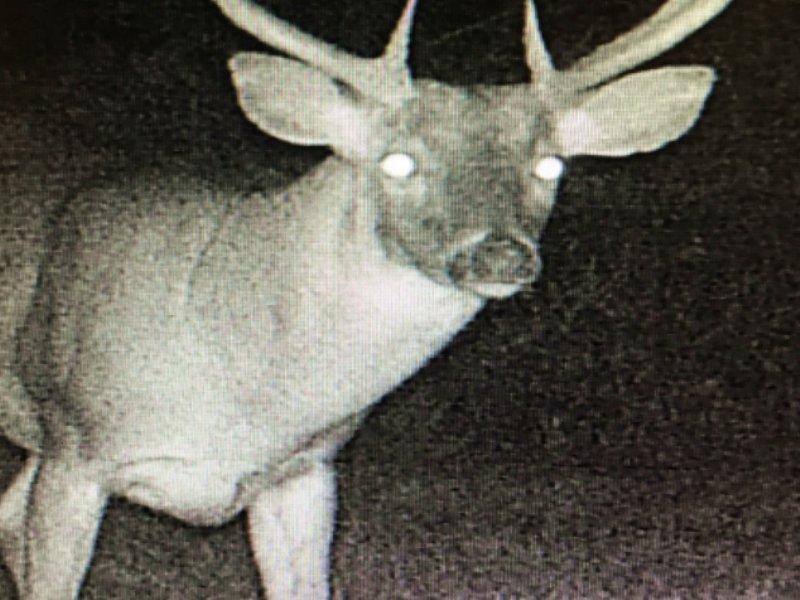 Hunting Land For Sale : Tallulah : Madison Parish : Louisiana
