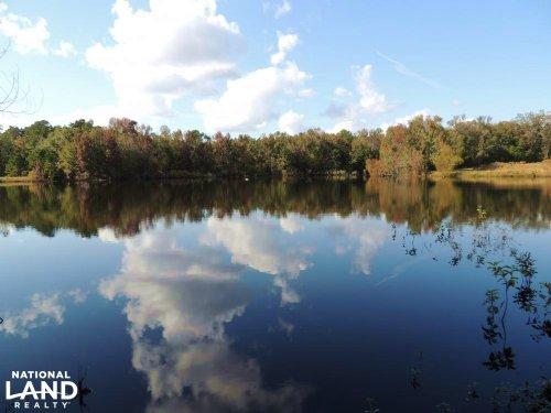 Little Salkehatchie River Hunting E : Blackville : Bamberg County : South Carolina