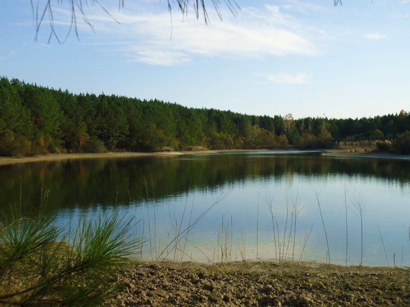Nine Lakes Plantation   $1695/acre : Dry Branch : Twiggs County : Georgia