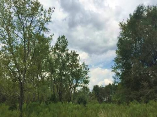 10 Acres Rural Land : O Brien : Suwannee County : Florida