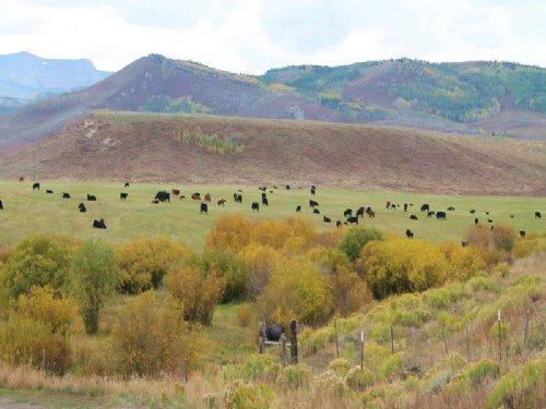 Wohler Gulch Ranch : Toponas : Routt County : Colorado